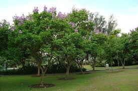 top 10 flowering trees in india top list hub