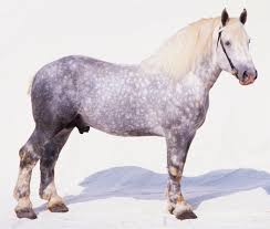 morgan horse breed profile and facts meet the mighty percheron horse