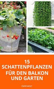 Pflanzen Fur Japanischen Garten Die Besten 25 Schattengarten Ideen Nur Auf Pinterest