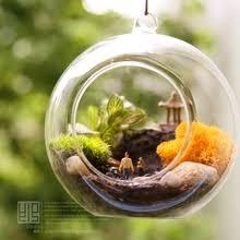 aliexpress com buy 10cm big terrarium borosilicate hanging glass
