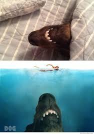 Jaws Meme - jaws dog weknowmemes