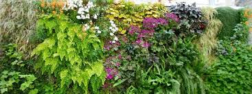 top 10 ornamental plants for vertical garden greenmylife