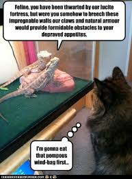 Lizard Meme - lolcats lizard lol at funny cat memes funny cat pictures with