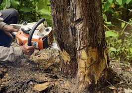 want to remove your tree by yourself here u0027s what diy tree removal