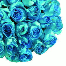 fresh flowers tinted turquoise roses 20 75 stems