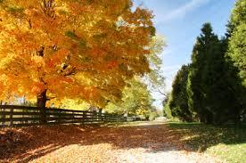10 fall foliage drives smartertravel