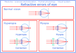 Eye Anatomy And Physiology Conceptdraw Samples Science And Education U2014 Medicine