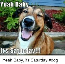 It S Saturday Meme - yeah baby lus saturday yeah baby its saturday dog meme on me me