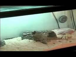reptile terrarium setup heating a uromastyx lizard terrarium