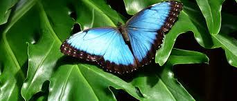 butterflies u0026 bugs in stratford upon avon stratford upon avon online