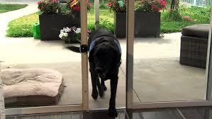 pet door in sliding glass autoslide automatic slider door opener pet door store