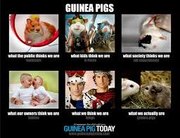 What We Think We Do Meme - chat guinea pig memes