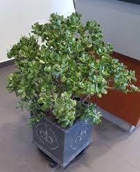 floor plant commercial office u0026 floor plants product categories judy u0027s