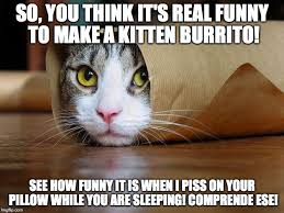 Funny Kitten Meme - kitten wrap imgflip