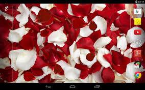 Rose Petals Rose Petals Live Wallpaper Android Apps On Google Play