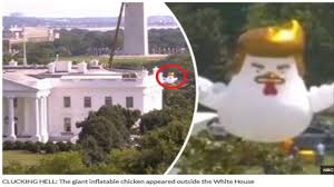 this is why a giant chicken with donald trump haircut has appeared