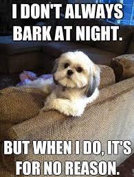 World Memes - 25 dog memes that will always make us laugh