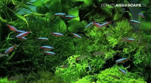 Plants For Aquascaping Pet Habitat South Africa