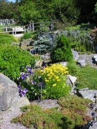 107 best gardening rock garden plants images on pinterest