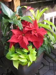 beautiful indoor plant containers hgtv