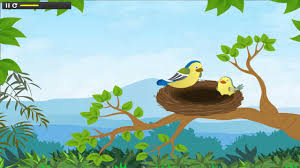 learn all about birds types of birds for kids animated video