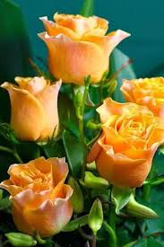 1073 best flowers images on pinterest plants flowers and