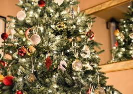 real christmas trees for sale where to find a real christmas tree at a price gumtree