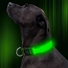 light up collar amazon amazon com led dog collar usb rechargeable adjustable nylon