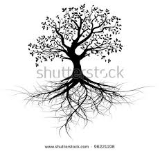 whole black tree roots isolated white stock vector 96221198