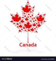 canadian maple leaf royalty free vector image vectorstock