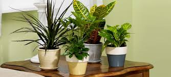 home interior plants indoor plants improve air quality exterior designs inc