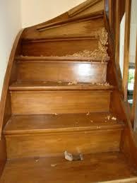 treppe aufarbeiten treppen abschleifen und treppenstufen schleifen in ganz hamburg