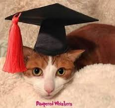 dog graduation cap dog graduation cap hat for small sized dogs with 6 11 collar size