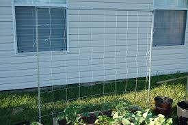 6 types of trellis for your garden