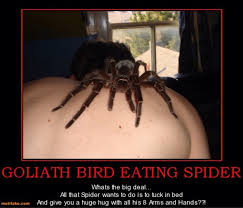 I Saw A Spider Meme - list of synonyms and antonyms of the word huge spider meme