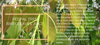 Plants Diseases And Treatment - jaundice symptoms causes and treatment traditional medicine
