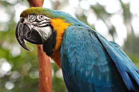 bird identification common blue parrot species