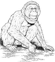 orangutan coloring pages for kids