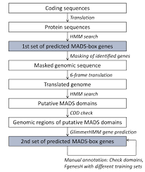 biology free full text phylogenomics of mads box genes in