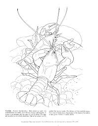 tadpole coloring page cajun coloring pages coloring home