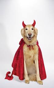 devil dog costume pets halloween costumes savers