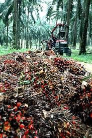 Minyak Kelapa Sawit Terkini anim agro technology industri sawit isu semasa