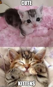 Cute Kittens Meme - cute kittens imgflip