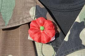 buddy poppies poppy veterans day public domain clip art photos