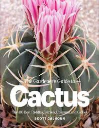 Seeking Cactus Cast The Gardener S Guide To Cactus Gnv64 By Martin Issuu