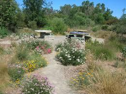 planting natives native plant garden design patio stones paths and native plants u