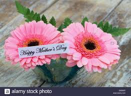 growing flowers for mother s day mothers day is approaching