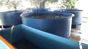 Backyard Shrimp Farming by Indoor Ras Farming Stac Aquaculture Training Provider In Malaysia