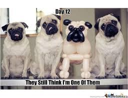 Balloon Memes - balloon dog undercover by karotte meme center