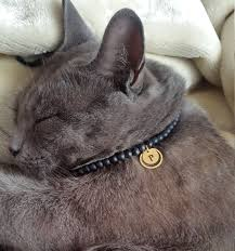 best 25 personalized cat collars ideas on
